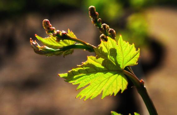 Paleros Travel - Agroturims - Vineyard