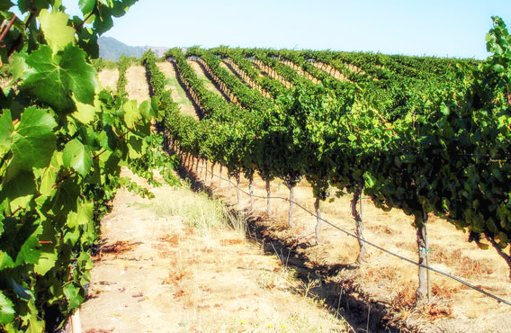 Paleros Travel - Agroturism - Vineyards in Paleros